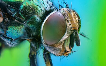 Extreme close up macro common green bottle fly insect background 스톡 콘텐츠 - 129409740