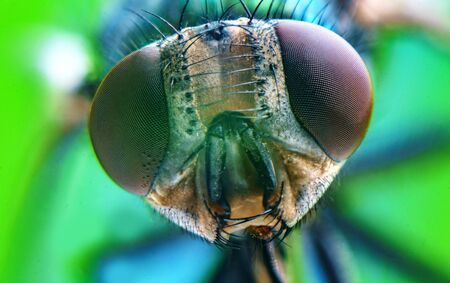 Extreme close up macro common green bottle fly insect background 스톡 콘텐츠