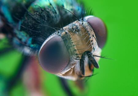 Extreme close up macro common green bottle fly insect background 스톡 콘텐츠 - 129409682