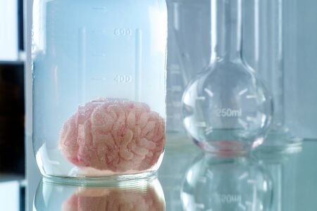 Human brain preserved in formaldehyde for science experiments and education on anatomy