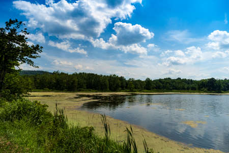 Algae on summer lake with bright sunlight and cloudscape Reklamní fotografie