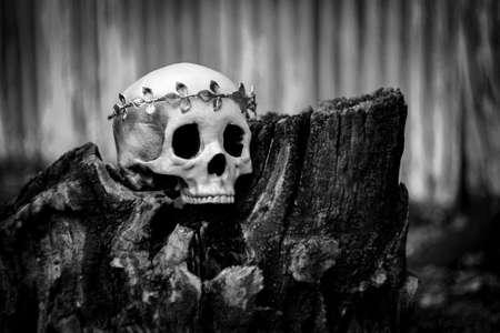 Human skeleton skull of King or Queen wearing royal gold leaf crown