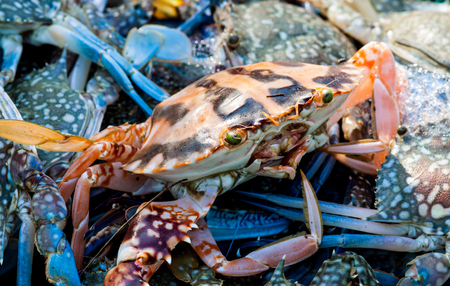 FRESH seafood: Crab seafood on market and blue background