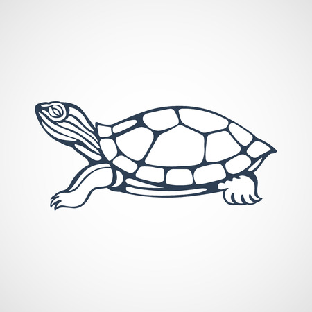 turtle isolated: turtle
