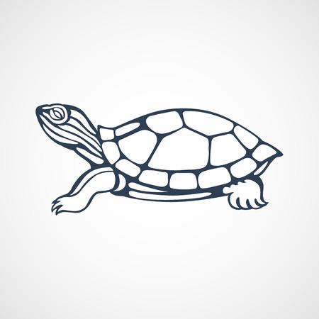 turtle 版權商用圖片 - 43420286