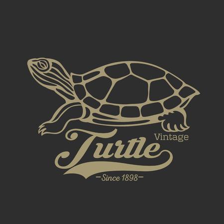 schildkroete: Schildkröte