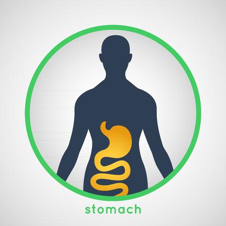 estómago Ilustración de vector