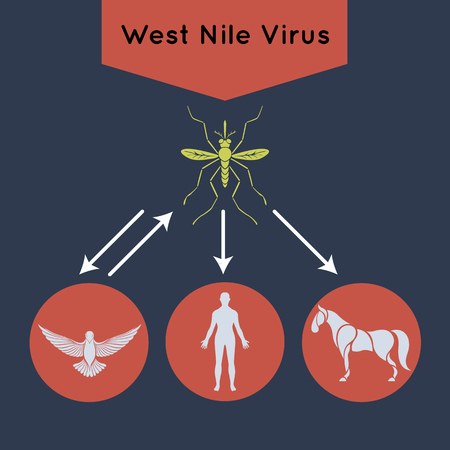 West Nile Virus vector icon illustration