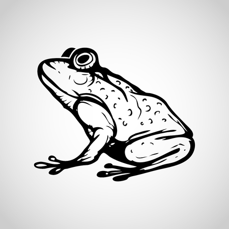 Vector image of frog on white background, Vector illustration.