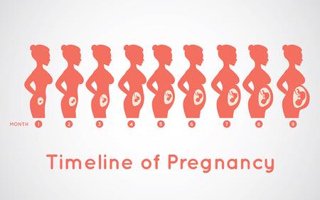 Timeline of Pregnancy infographic icon design, medical vector illustration