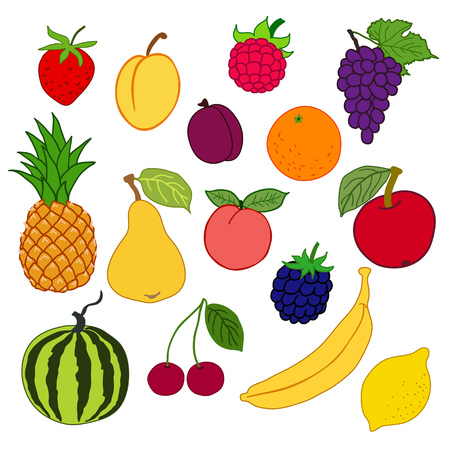 frutos rojos: vector illustration: fruits and berries