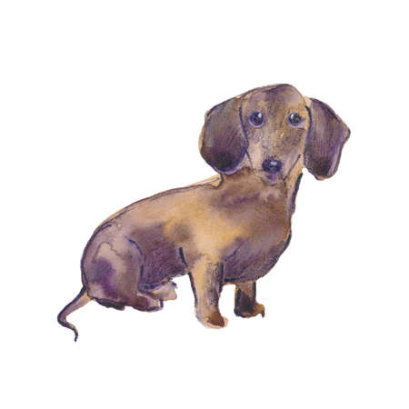 Hand painted watercolor illustration: Dachshund dog breed. Sketch