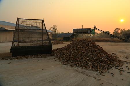 establishment: cassava root from agricultural product processing establishment