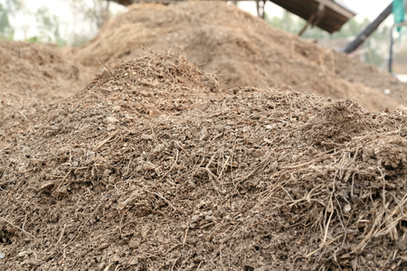 cassava: cassava waste from agriproduct processing establishment