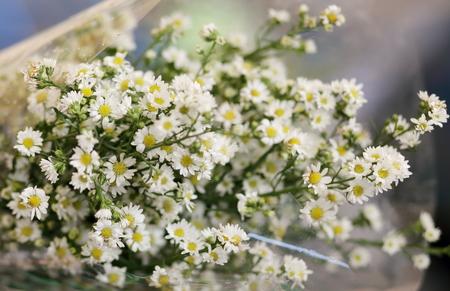 cutter: White Cutter Flower