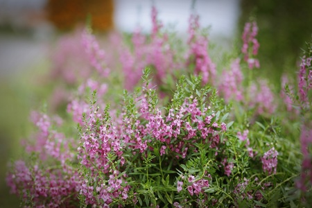 close up: close up of pink flower