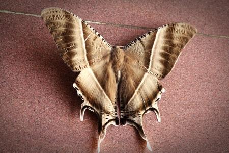 big: Big butterfly