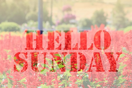 sunday: Hello Sunday word on red flower background