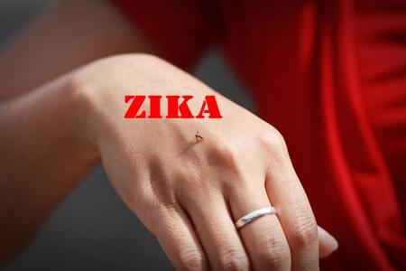 sucking: mosquito sucking blood with Zika word