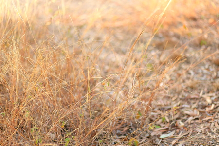 hay field: Hay field, dry grass for background, brown natural background
