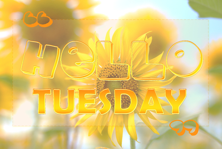 tuesday: Hello Tuesday on sunflower background