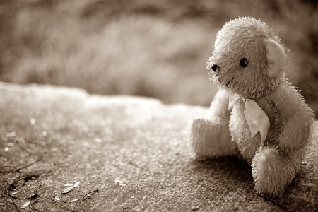 bear doll: bear doll on nature background