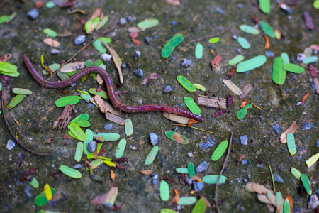 earthworms: earthworms, angleworms