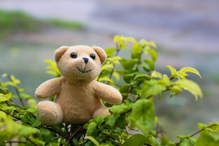 little bear doll with natural background