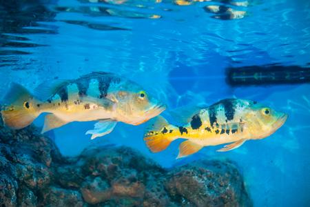 Close up of small fish in aquarium Stock Photo