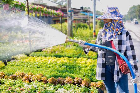 regando plantas: Jardinero regar las plantas en el jardín. Foto de archivo