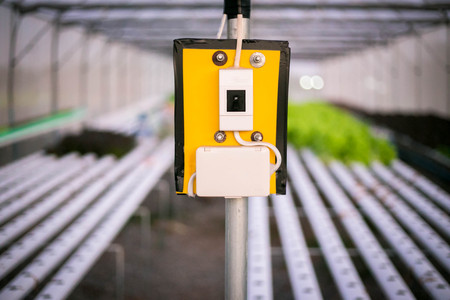 cultivation: Circuit breaker in Organic hydroponic vegetable cultivation farm.