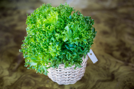 Organic hydroponic vegetable on the table.