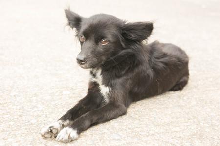 drowsy: black dog lying down on concrete floors Stock Photo