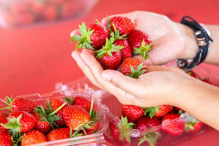 Fresh strawberries in womans hand