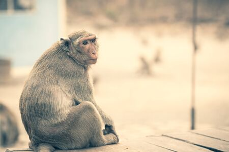 A pensive lonely monkey sits on a wooden chair waiting food. The concept of animals in the zoo.