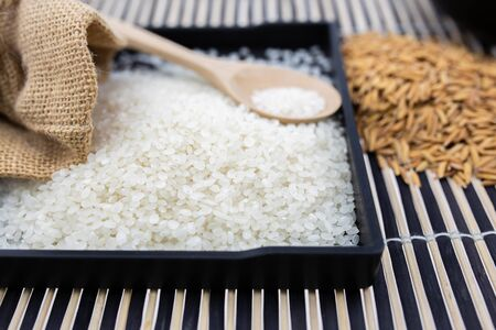 Paddy rice and rice on white background   . 写真素材