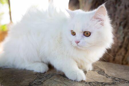 white cat on the floor, cutie cat.