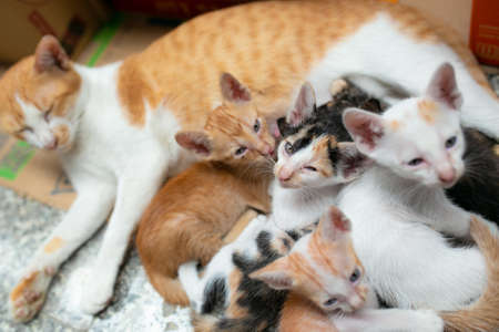 Mama cat and 5 kitten, they are only one months old.