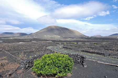 Lanzarote, Canary islands, Spain  A vineyard with vines growing in black sand, in sectors with walls built of volcanic rock, with sea in the horizon on a misty day  photo