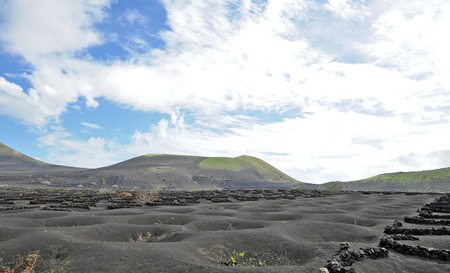 Lanzarote, Canary islands, Spain  A vineyard with vines growing in black sand, in sectors with walls built of volcanic rock Stock Photo - 27229049