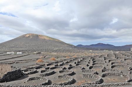 sectores: Lanzarote, Islas Canarias, Espa�a Un vi�edo con las vides que crecen en la arena negro, en sectores con paredes construidas con piedra volc�nica Foto de archivo