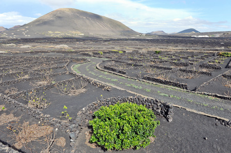 Lanzarote, Canary islands, Spain  A vineyard with vines growing in black sand, in sectors with walls built of volcanic rock  Stock Photo - 27229057