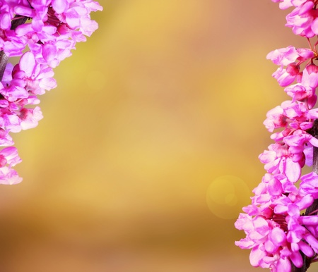 A picture of fresh spring flowers over a yellow background, perfect for romantic wishes Stock Photo - 9112890