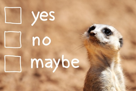 A portrait of a cute african suricate making decision over light brown background photo