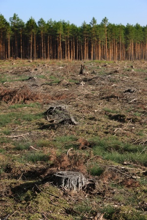A picture of tree stumps and green forest in the background photo