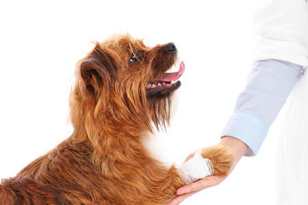A picture of a dog with hurt paw giving thanks to the vet photo