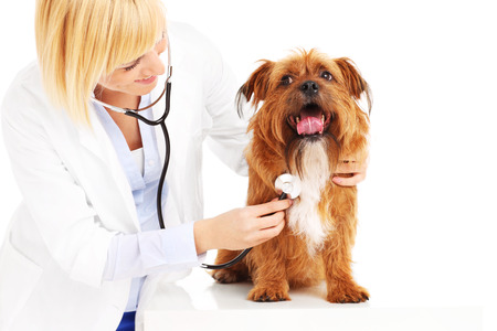 A picture of doctor examining a dog over white background photo