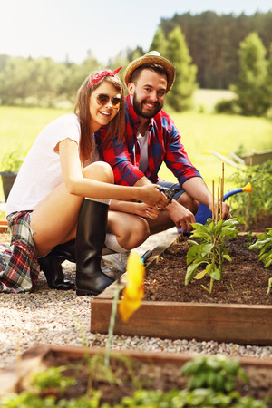 allotment: Picture of young couple planting organic vegetables and herbs
