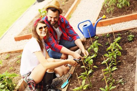 uomo felice: Immagine della giovane coppia piantare ortaggi biologici e le erbe aromatiche
