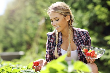 Happy woman collecting fresh strawberries in the garden